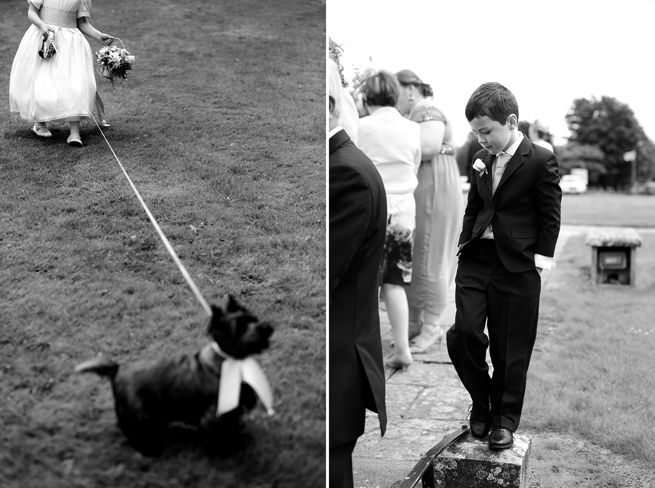 wedding dog cairn terrier